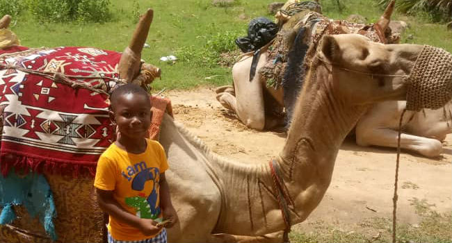 The young Seydou among the camels